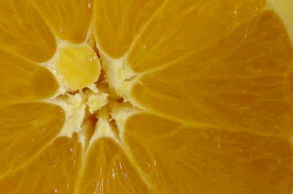 Photo of an orange slice
